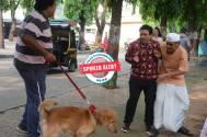 Taarak Mehta Ka Ooltah Chashmah: Bapuji in TROUBLE