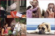 Bollywood's most iconic 'pet' characters!