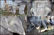 PETA and Swastik Pictures lock legal horns over use of baby elephant in Zee TV