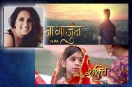 Nagarjun or Shakti- Which show will do well?