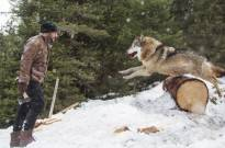 Salman Khan battles wolves in 'Tiger Zinda Hai