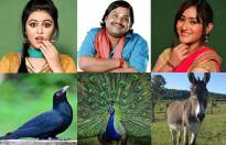 Match the 'Chidya Ghar' actors with the animals they play