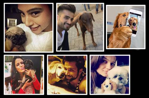 Insta love: #Petfies of TV Celebs